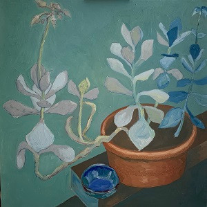 Turquoise succulents, with blue bowl