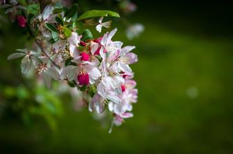 Flower in Botanical Gardens