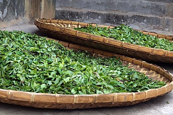 tea leaves drying in wicker basket .jpg