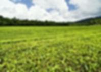 Tea Plantation.jpg