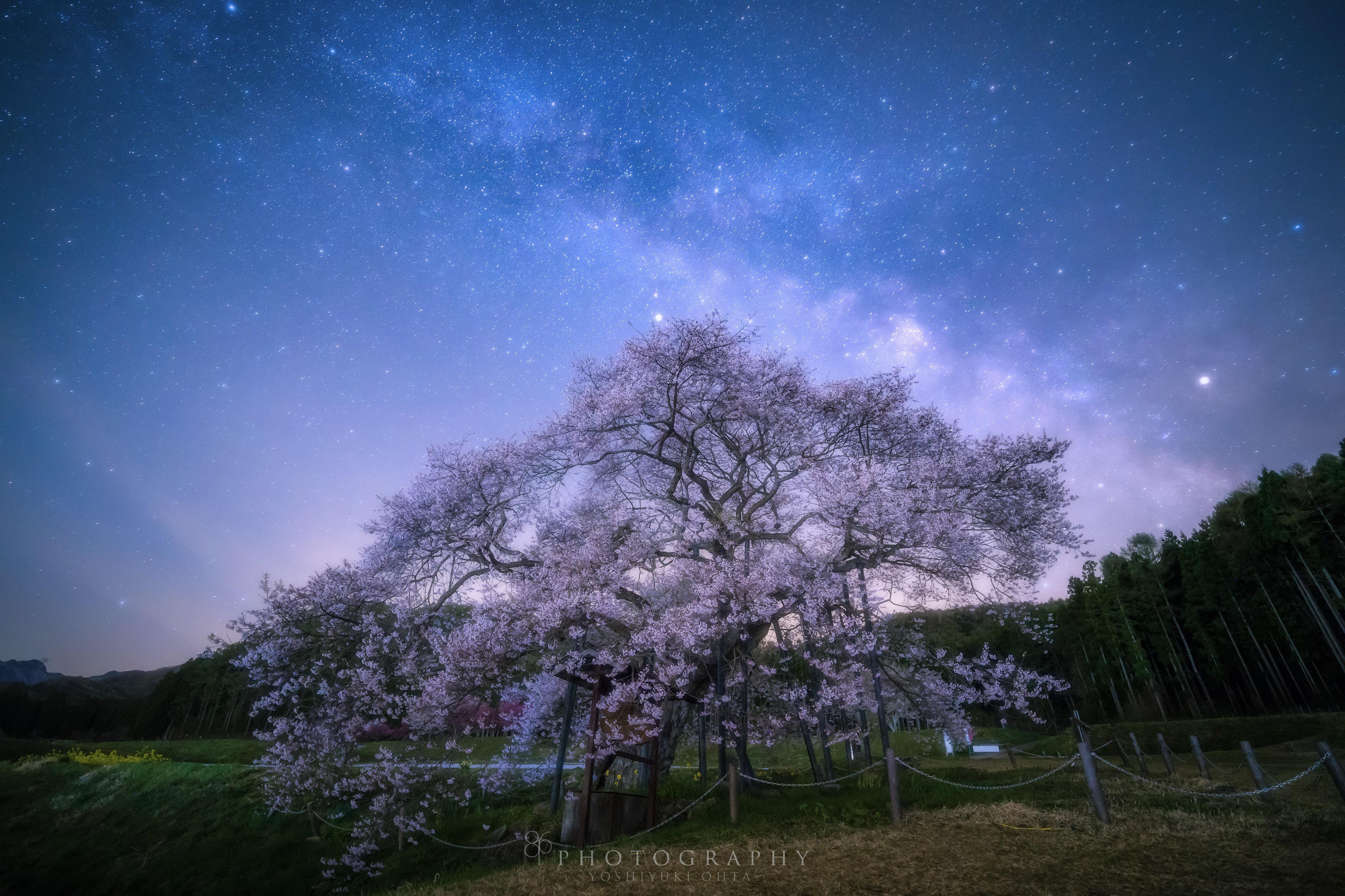 天の川と桜