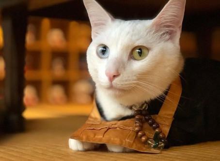 究竟飼養貓狗能使用藏香嗎?