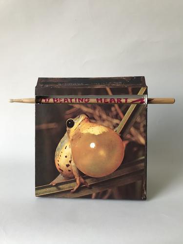 IMG_5759_frog.HEIC