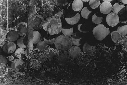 JAKE CALEB, Stacks of wood (2020)