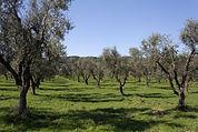 Regiões de azeite em Portugal