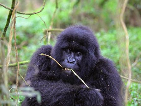 Rwanda safari COVID-19 update - May 2021