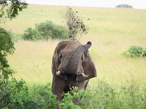 Rwanda - Elphant Tipping Mud.JPG