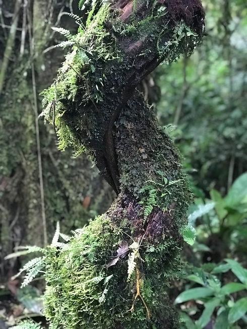 Uganda - Nature Walk in Kibale Forest Na