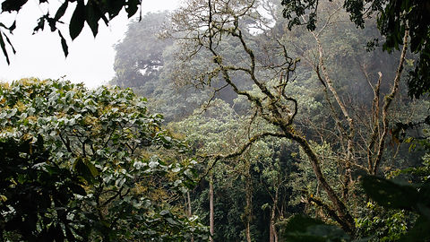 Rwanda - Nature Walk in Volcanoes Nation