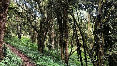 Uganda - Mount Elgon 6.jpg