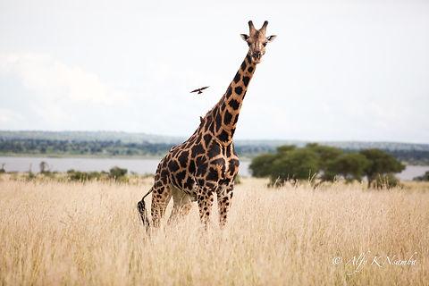 Uganda - Rotary Murchison Falls National