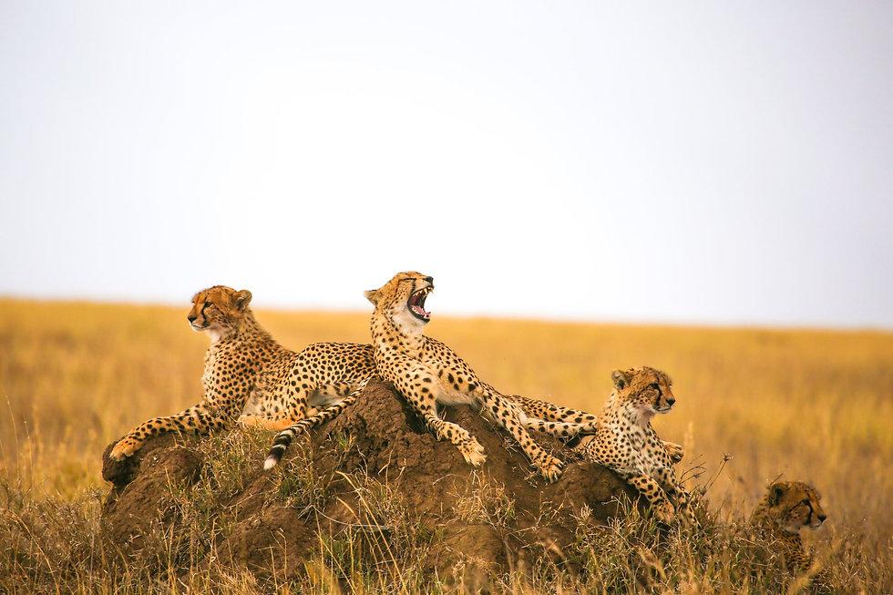Tanzania - Discover Tanzania (1).jpg