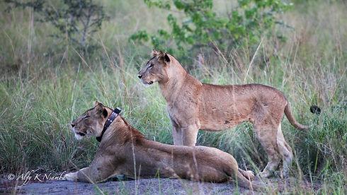 Uganda - Uganda Carnivore Project.jpg