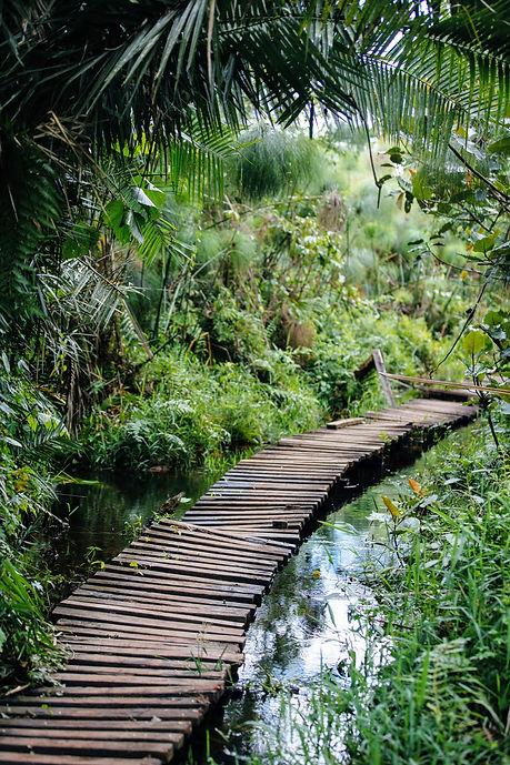 Uganda - Bigodi Swamp Walk.JPG