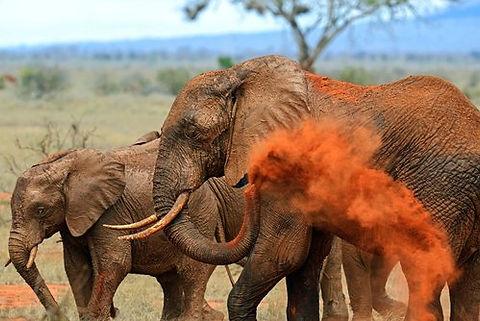 Kenya - Tsavo (1).jpg