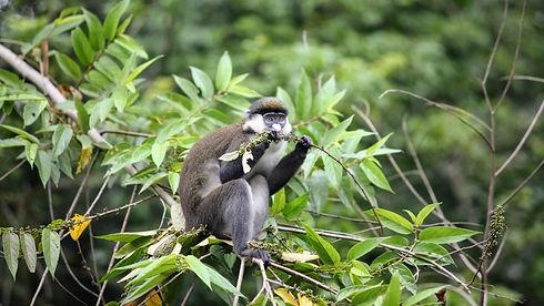 Transport to Kibale Forest-min.JPG