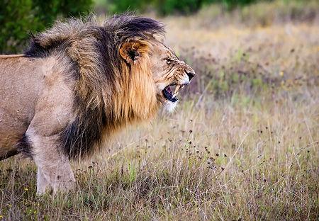 Kenya - Major National Parks in Kenya (1