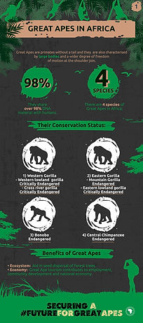 GreatApeCampaign-Infographic-01-v3-01.jp