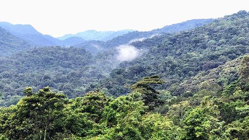 Uganda - Bwindi Forest .jpg