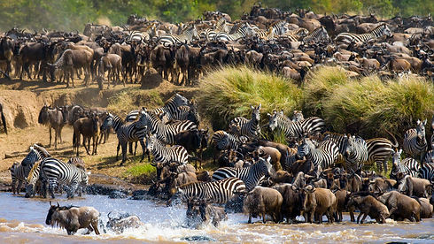 Tanzania - Great Migration - River Cross