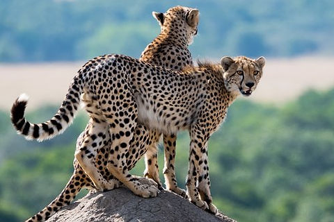 Kenya - Masaai Mara (1).jpg