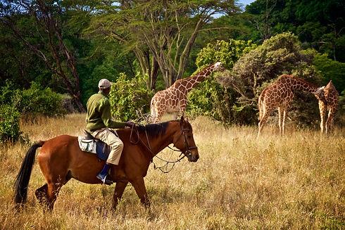 Uganda - Horse Riding Safari.jpg