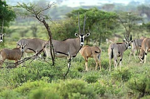 Kenya - Samburu National Park.jpg