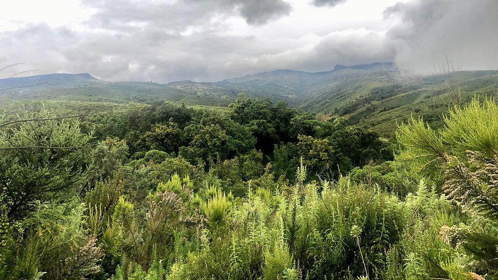 Uganda - Hiking and Mountaineering-min.j