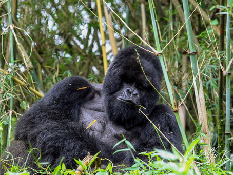 Rwanda amends COVID-19 testing requirements for Tourists