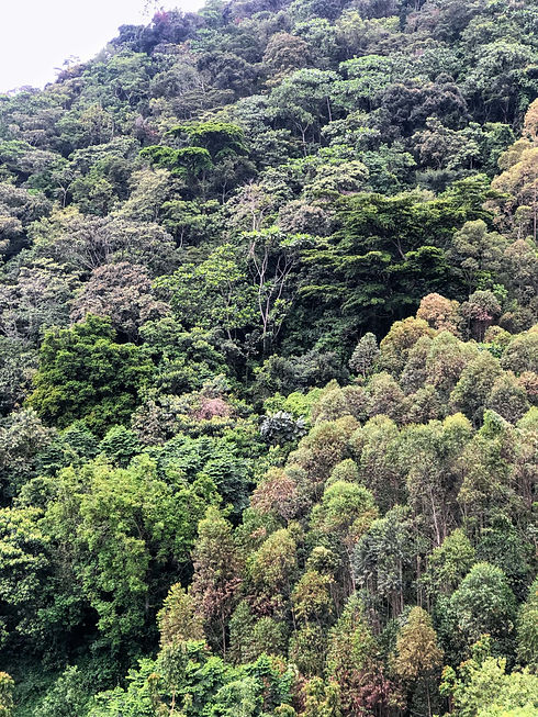 Uganda - Bwindi Impenetrable Forest-min.