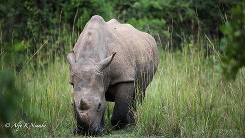 Uganda - Ziwa Rhino Sanctuary Kori.jpg