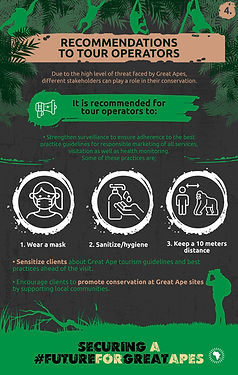 GreatApeCampaign-Infographic-04 (1).jpg