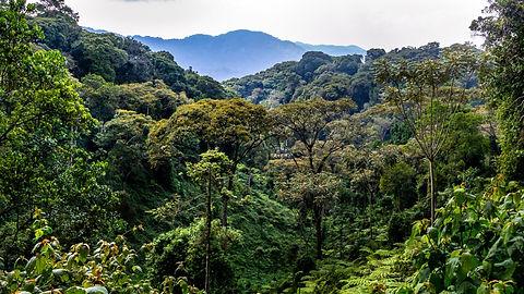 Rwanda - Nyungwe Forest.jpg