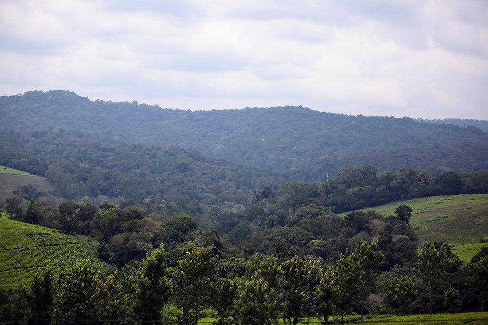 Uganda - Kibale Forest-min.JPG