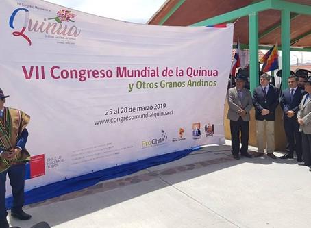 Se prepara el VII Congreso Mundial de la Quinua en Chile