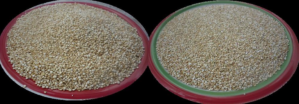 Control de Calidad Quinoa Real