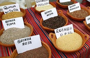 Variedades de Grano de Quinua