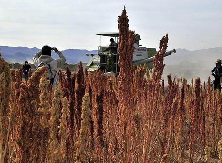 Bolivia exportará por primera vez fideo de quinua y aceite de sésamo a seis países