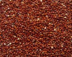 Quinoa Roja