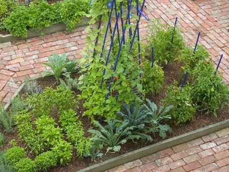 A Kitchen Garden