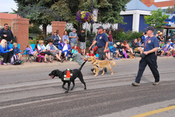 SAR at Stampede 2015 - search dogs