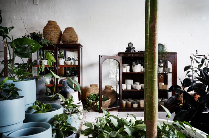 Plant Society 2.PNG
