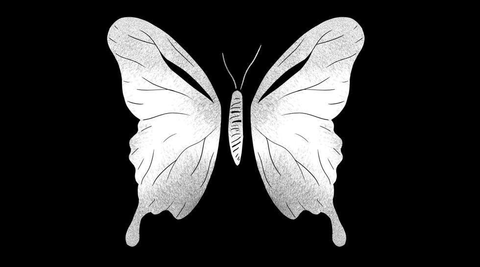 butterfly06.jpg