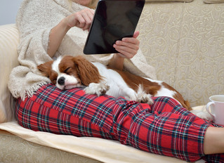 Moving? Your Pet Needs a Resume
