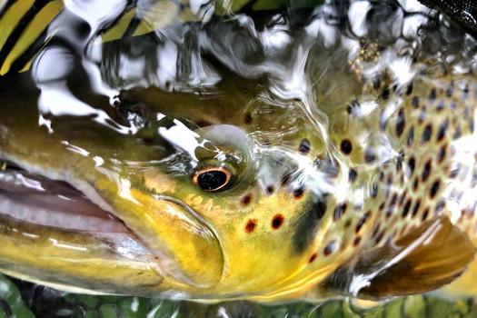 F.I.T. Program Freshwater