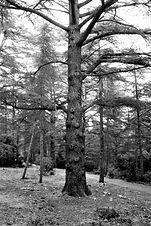 Trees Forest & Vegetation