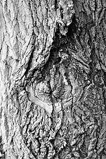 Faraya Trees