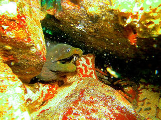 moray eel from the galapagos islands