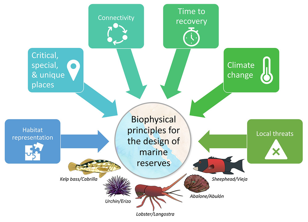 schematic biophysical marine reserve principles
