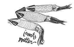 California market squid
